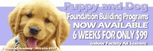 Puppy and Dog training classes $99 for 6 Weeks