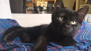 JUNO IS UP FOR ADOPTION THROUGH PET SAVE.