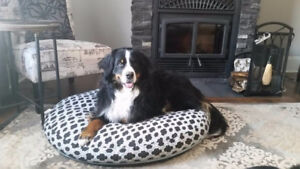 Professional In your Home Pet Sitter, Mature, Experienced ,