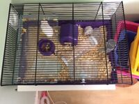 Two dwarf hamsters and cage