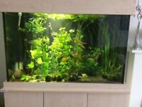 200 litre fish tank with stand/accessories/fish