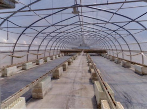 18,000 sq/ft of greenhouses for rent