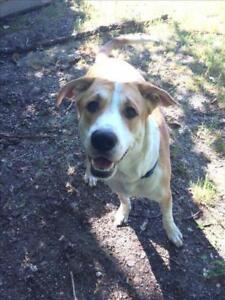 """Young Male Dog - Coonhound-Border Collie: """"Bernie"""""""