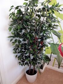 PREMIUM ARTIFICIAL FICUS TREE 150 cm with LARGE WHITE SCHEURICH PLANTER