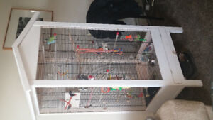 pair of parrottlets and large cage