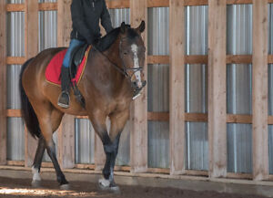 Amateur Dressage Horse for Sale