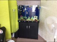 Fish tank and floval filter
