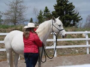 Spirit Horse Mental Health Program
