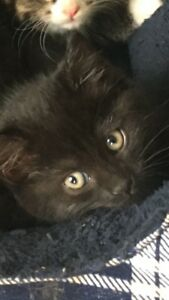 Kittens **Dewormed & First Booster**