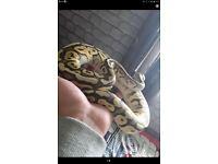 Super pastle python