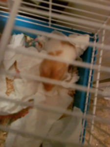HAMPSTERS!!!❤