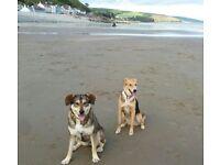 The Wag and Bone Lady Dog Walking Service