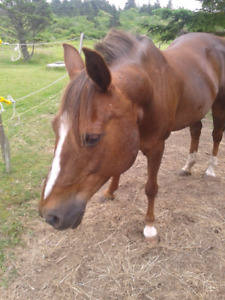 Home for Retired Mare