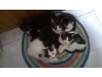 Kittens for sale - Available now