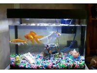 40 ltrs Fish tank