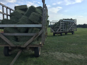 Premium 2nd cut horse hay