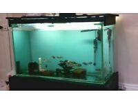 Fish tank Custom Built