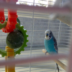 parkeet with cage,Accessories,food and toys