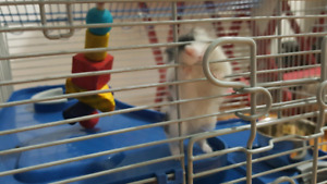 2 Russian Hamsters w/ cage, food, wheel and ball