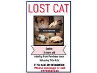 Missing cat !!! Cash reward