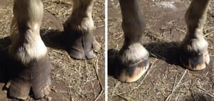 Nailed It Farrier Service