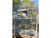 Large Rodent cage + wheel & toys