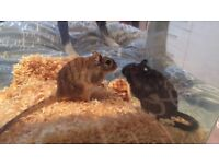 Selling a gerbil cage with 2 baby gerbils