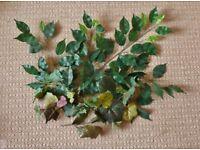 14 Artificial Green Foliage Leaves Leaf Ivy Stems for Flower Arrangements Arts Crafts