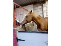 Horses for part loan