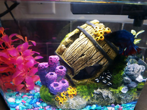 Fish tank with fish and supplys for the year