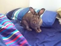 rabbit needs a loving forever home urgently!