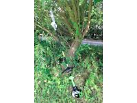 Petrol Pole Saw (Tree Pruner Chainsaw) with WARRANTY. Split-Shaft for easy transport