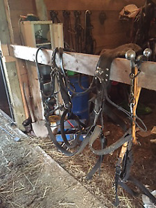 Team Leather Harness for sale