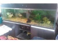 Fish Tank 6x2x2