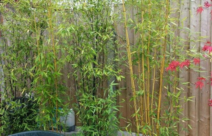 Black Bamboo 35 Ltr pots