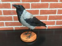 taxidermy hooded crow