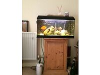 Fish, tank, cabinet and all accessories for sale