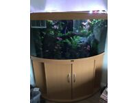 Juwel Trigon 350l fish tank