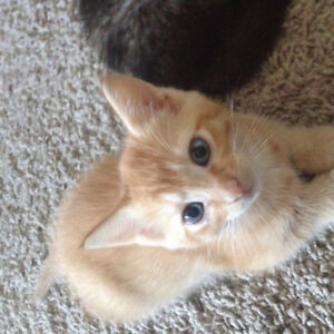 Kitten Looking For Re-Homing