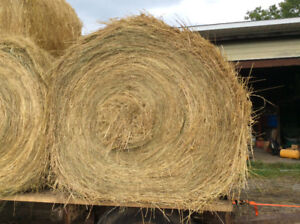 Good quality hay for sale