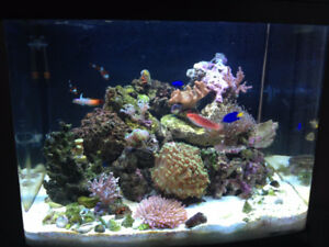 Biocube 29 Saltwater Aquarium with live rock and coral