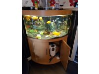 Fish tank 190ltr corner tank with 5 parrot fish and 2 albino fish price 180