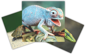 Reptiles - mobile party & educational exhibits and shows.