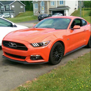 2015 Ford Mustang GT 50 Years Edition Coupe (2 door)