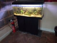 90cm tropical fish tank aquarium with fish and accessories
