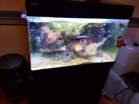 Marine tank, redsea max 250 with filter and chiller liverock soft corals and cleanup crew