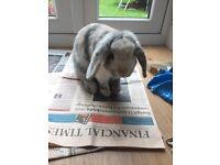 Lost Rabbit Bunny central Guildford