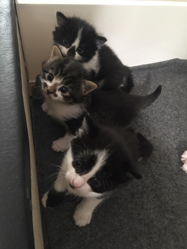 **SOLD** FEMALE KITTENS FOR SALE