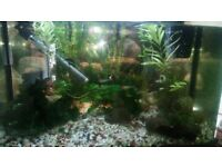 Fish tank aquarium with 4 small fish, room for more. Collection from Berrynarbor by Sunday. Free!