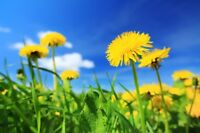 Weed Control & Lawn Fertilizing Services !!